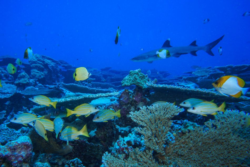 Damaged seamounts in Hawaii make incredible comeback after decades of protection