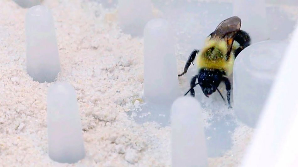 Bees could play a big role in eliminating the need for spraying pesticides