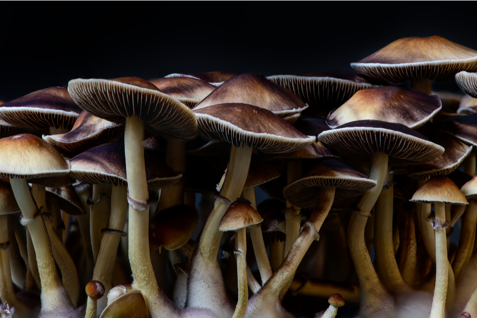 Magic Mushrooms The New Potential Cure To Depression: Yale Study